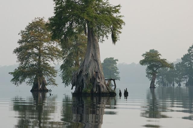 great-dismal-swamp-940495_640